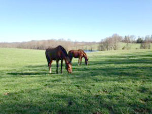 The historical 60 acre Chatfield-Taylor Farm, in Northern VA